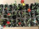 Tulpen für Brot 2021
